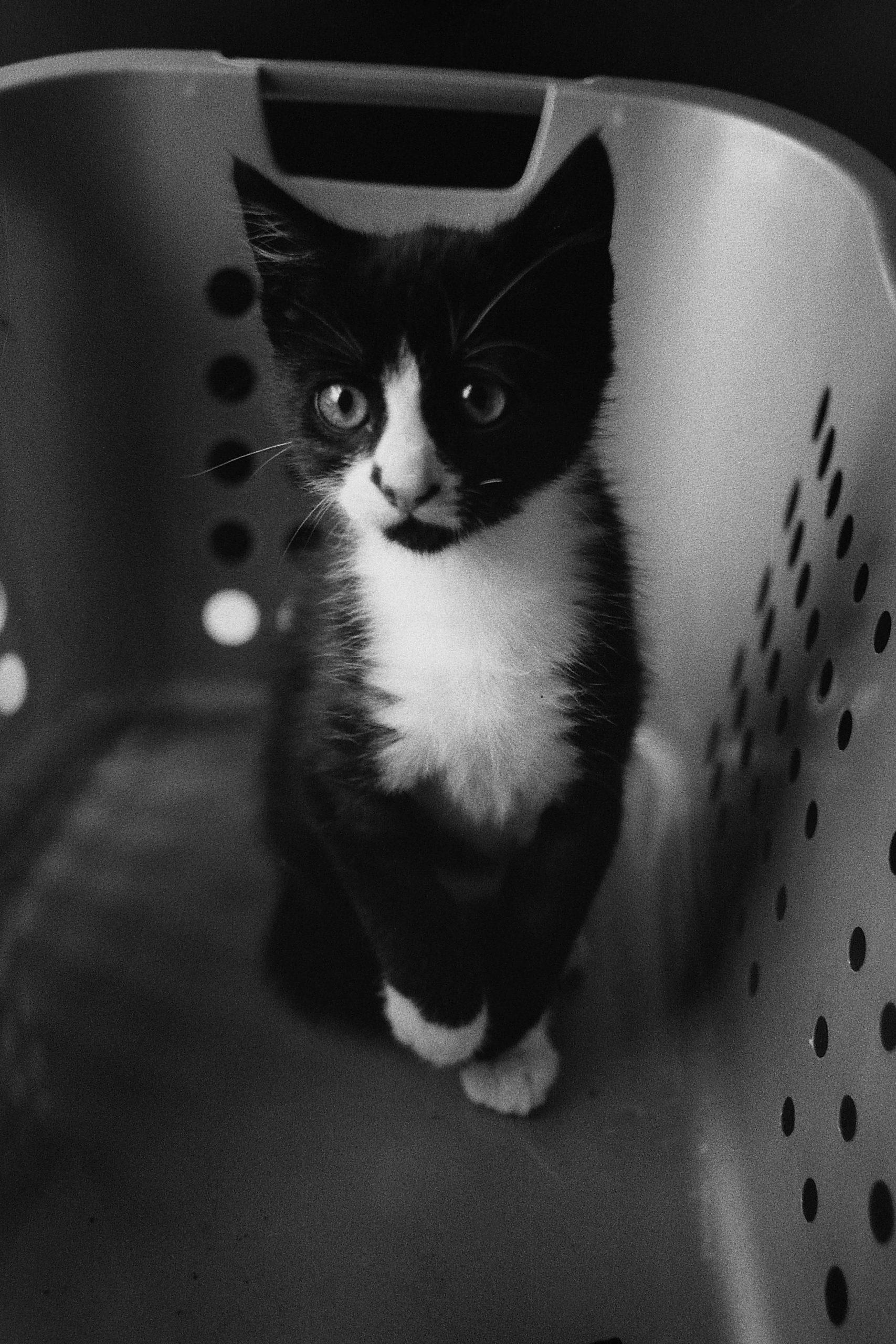 cat-george-6